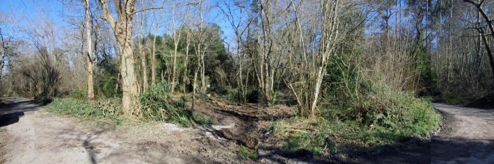 Selva Asturiana ESTUDIO BHER 1