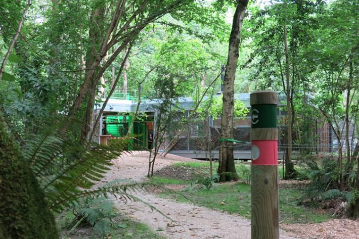 Selva Asturiana ESTUDIO BHER 12